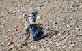 Japanese support boosts Afghanistan's demining efforts
