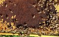 Returnees in central highlands hope for sweet profit from beekeeping